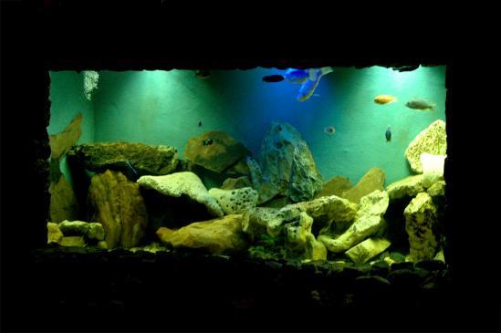 Jak czyścić akwarium?