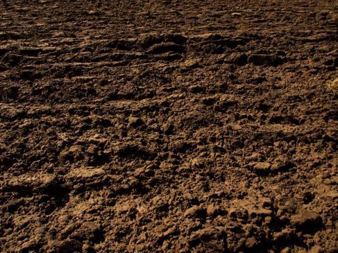 Jaka ziemia do sadzenia iglaków?