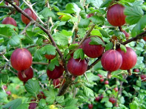 Pielęgnacja drzew i krzewów owocowych