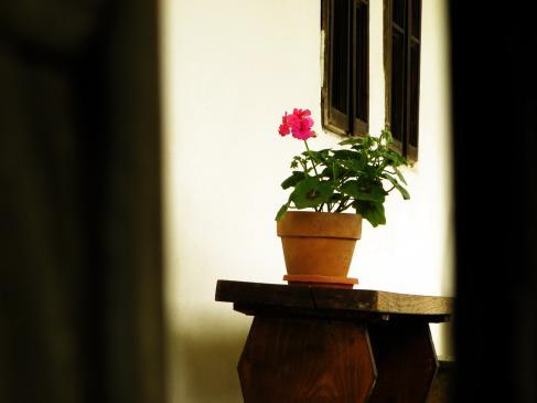 Jakie rośliny do donic ogrodowych?