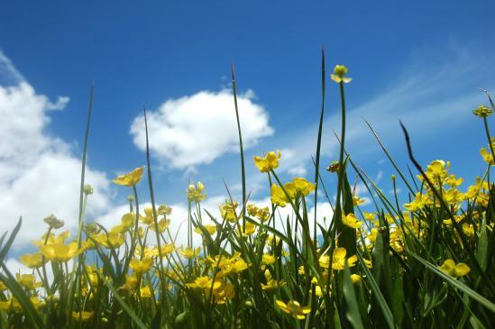 Jak powinien wyglądać ogród ekologiczny?