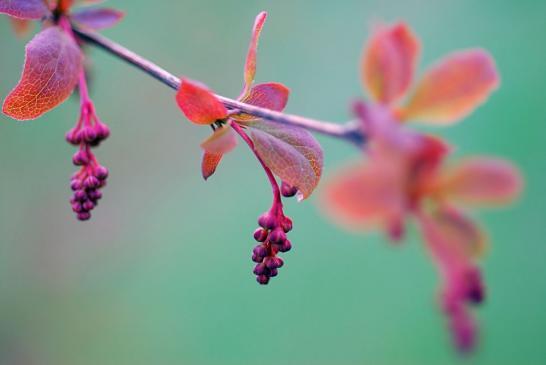 Jakie rośliny o ozdobnych liściach do ogrodu?