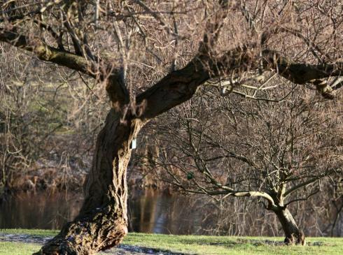 Jak przesadzać duże drzewa?