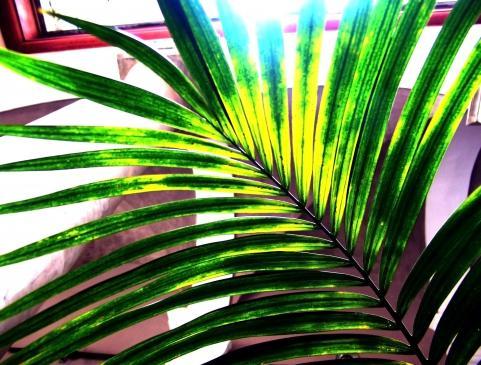 Jak chrześcijanie obchodzą Niedzielę Palmową?